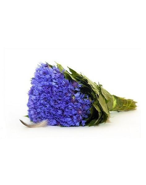 Васильки в качестве похоронных цветов