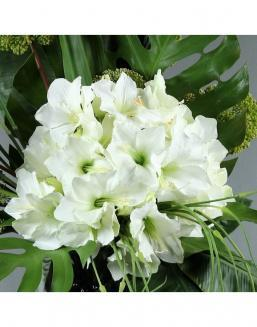 Bouquet of 25 white amariliss | Flowers to girlfriend