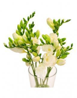 Bouquet of white freesia | Flowers to girlfriend