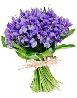 Bouquet of 51 blue irises | Flowers to girlfriend